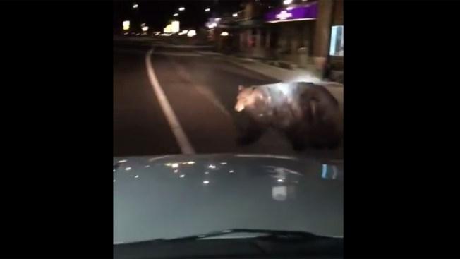 'Hey Big Boy' Deputy Scares Off Bear Window Shopping in Lake Tahoe