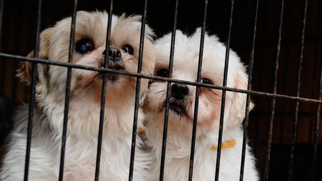 The Puppy Mill Problem: Where They Persist and Why