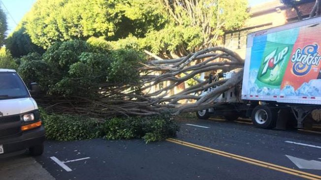 Tree Falls on Unoccupied Car in San Francisco's Hayes Valley