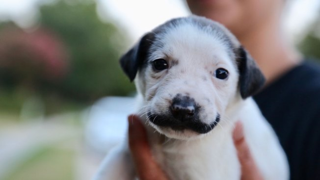 People Are Falling in Love With This Mustached Puppy