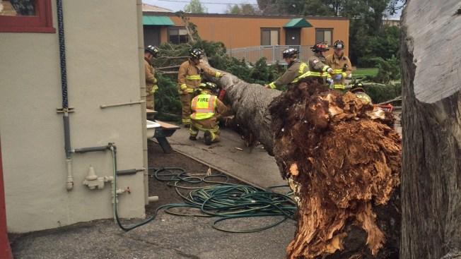 2 Kids Hurt By Falling Tree at Santa Cruz Elementary School