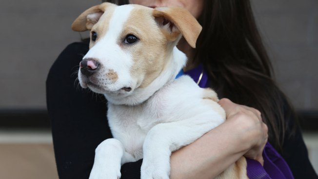 Adopting a Pet: What Shelters Want You to Know