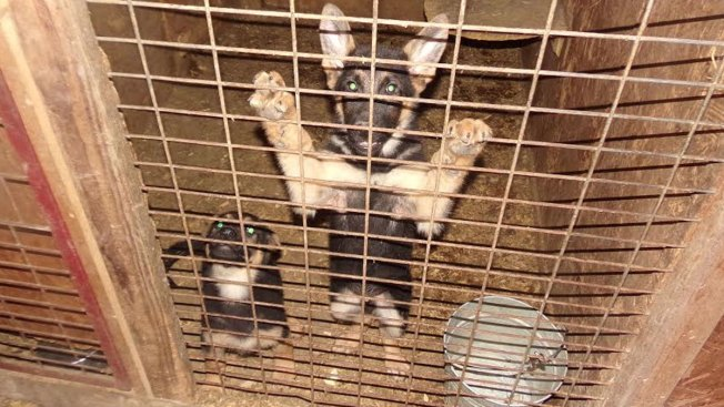 73 Dogs Rescued From North Texas Puppy Mill