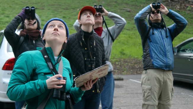 Biggest Christmas Bird Count Ever Expected in Oakland