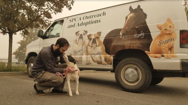 Butte County Animals Make Room for Camp Fire Victims' Pets