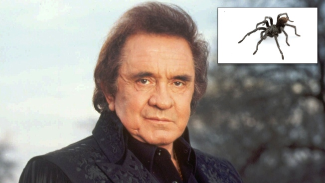 Species of Tarantula Native to Folsom Area Named in Honor of Johnny Cash