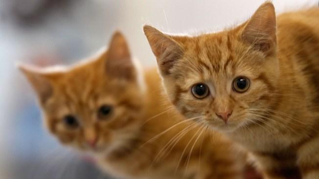 Annual Burlingame Kitten Nursery Shower Returns