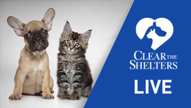 Clear the Shelters: Watch Live