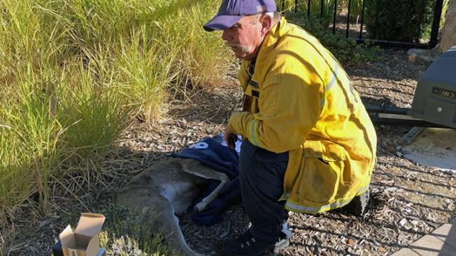 Firefighters Rescue 2 Deer Stuck in Fence in Oakland; 1 Dies