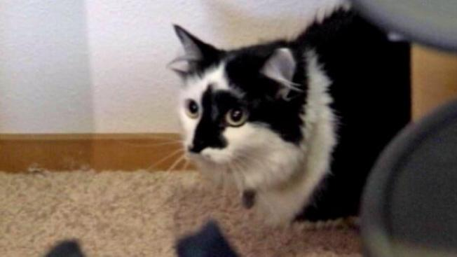 "Animal Planet's ""My Cat From Hell"" Star to Meet Oregon Hostage Cat"