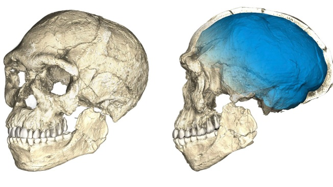 Oldest fossils of homo sapians alter understanding of human origins