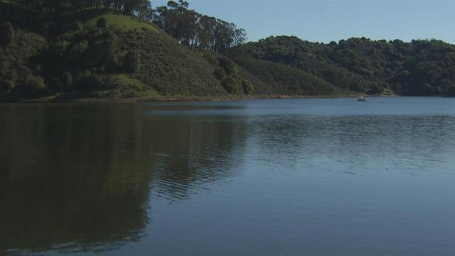Three Dogs Die From Blue-Green Algae After Visiting Lake Chabot