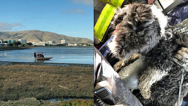 Man, Dog Rescued in Shallow Bay Waters Near SFO