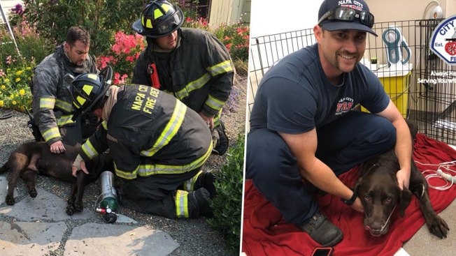Firefighters Rescue Chocolate Lab From Napa House Fire