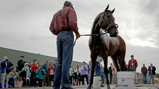 Omaha Beach Is 4-1 Early Favorite for Kentucky Derby
