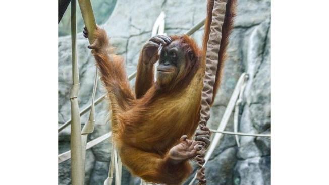 ζώο σε απευθείας σύνδεση dating Ταχύτητα dating MT ευχάριστο mi