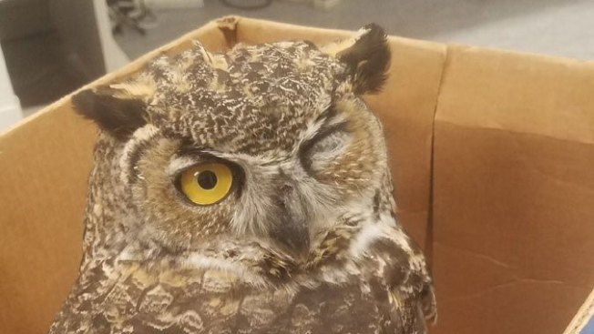 Sheriff Rescues Owl in West Marin County