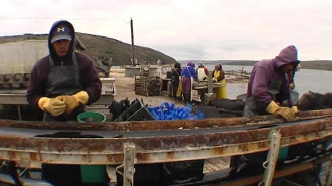 Drakes Bay Oyster Farm Wins Injunction Blocking Closure During its Appeal