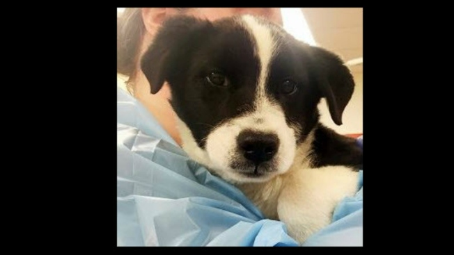 Six Border Collies Found in Merced Dumpster, Taken to San Francisco SPCA