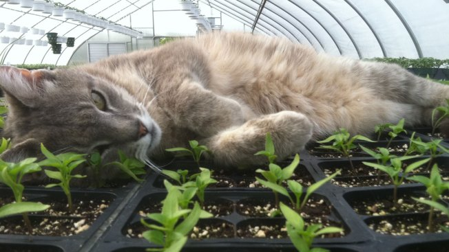 Rutger, the Rutgers Gardens Cat, Dies at 21