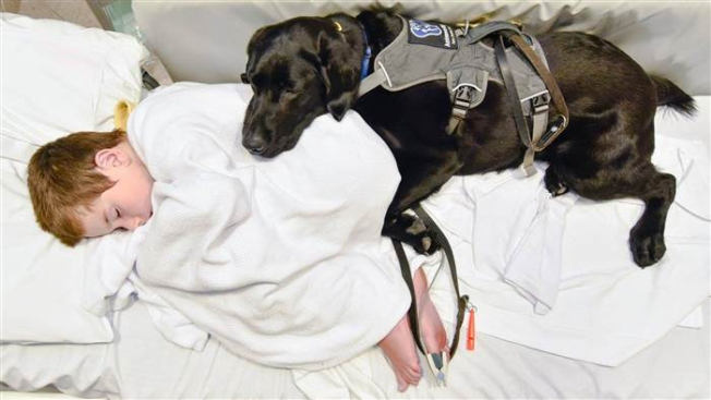 Service Dog Hops Into Hospital Bed With Boy With Autism