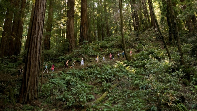 13,000 Free Passes to 116 California State Parks on 'Green Friday'