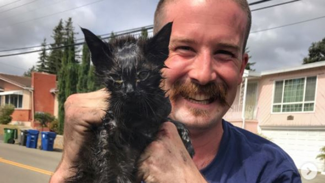 Alameda County Firefighters Rescue Stray Kitten From Car's Engine