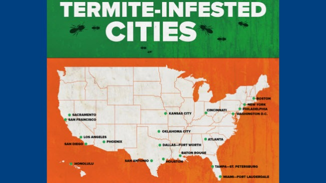 San Francisco Among Most Termite-Infested Cities in America: Terminix