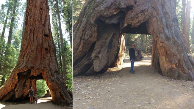 Iconic 'drive-through' tree destroyed after storm batters California