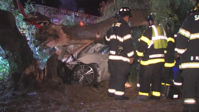 Driver Killed After Striking Tree in South Bay