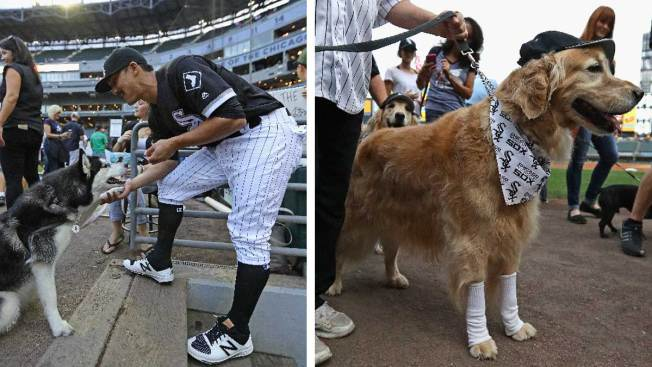 [NATL] White Sox 'Bark in the Park' Sets Guiness Record