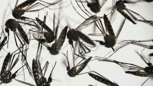 Fear of Zika Impacts Daily Life, Travel in U.S., Latin America