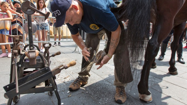 'AAA for Horses': When NYPD Horses Lose Shoes, the Blacksmith Comes to Them