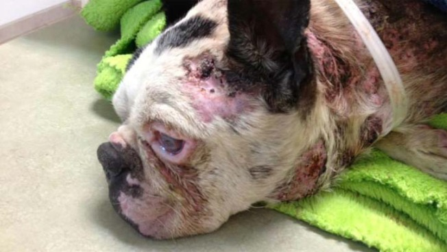 $5,000 Reward Offered After Dog Found Apparently Tortured