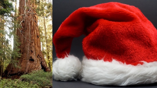 Santa Events + Nature, a Winning Combo