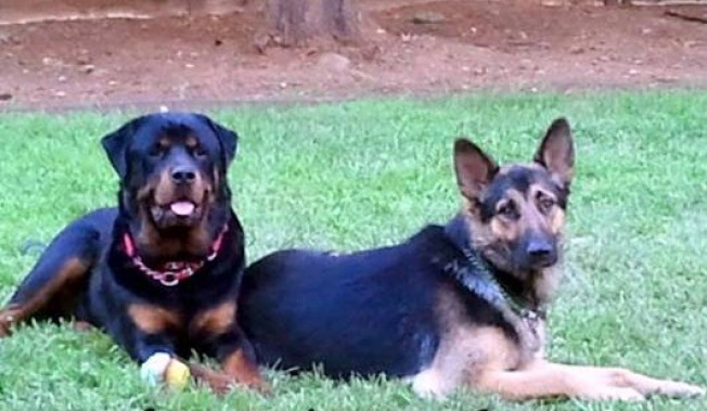 Brentwood Couple Launches Petition After Man Allegedly Kills, Buries Their Dogs