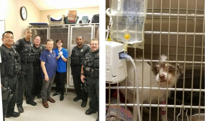 Officer Saves Dog Trapped Under Car, Pays for Surgery