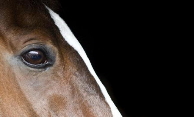 CA Horses Quarantined Due Deadly Outbreak