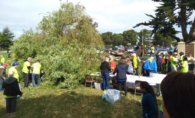 Two People Injured After 40-Foot Tree Falls at San Leandro Park