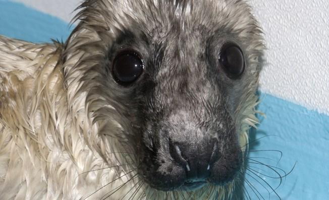 Local Seals Give Birth