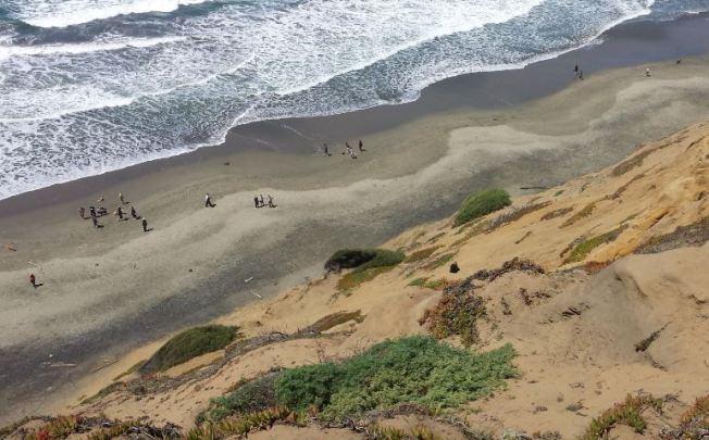 Rescue Attempt Underway for Dog Stuck on Fort Funston Cliff