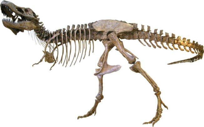 T. Rex More Like Hyena Than Rampaging Hunter