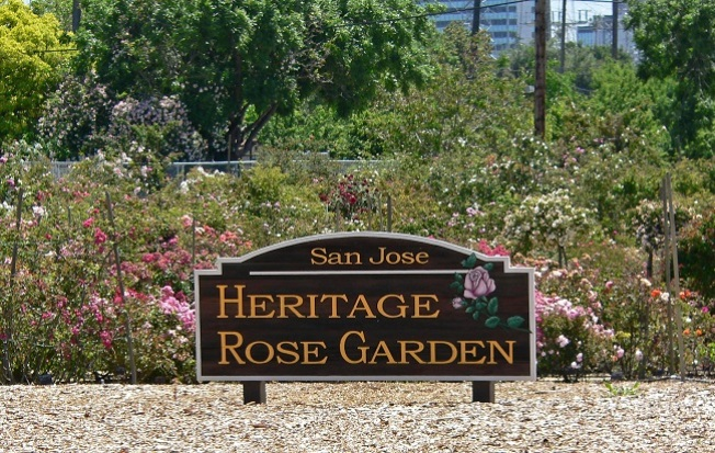 Adopt a Rose for Mother's Day from the San Jose Heritage Rose Garden