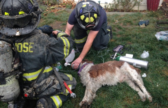 San Jose Firefighters Perform CPR on Woman, Dog