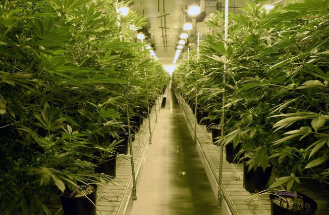 Not Easy Being Green: Legal Pot Brings Environmental Rules