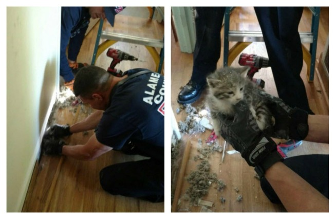 Alameda County Firefighters Rescue Cat With Thermal Imaging Camera