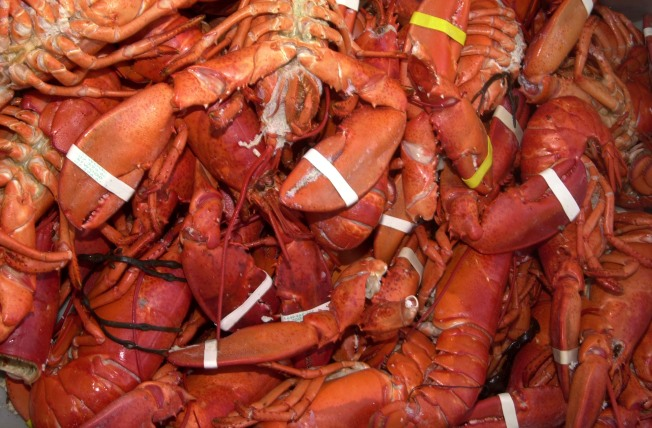 Seafood Lover Smuggles Crustaceans in Crotch