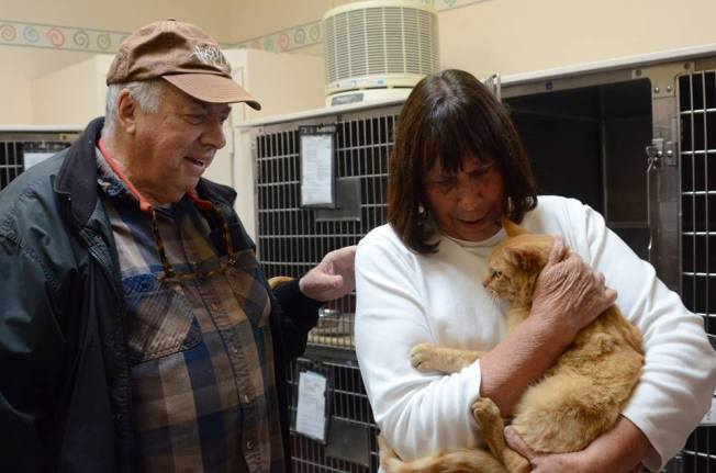 Cat Missing for 8 Years Reunited With Family in North Bay