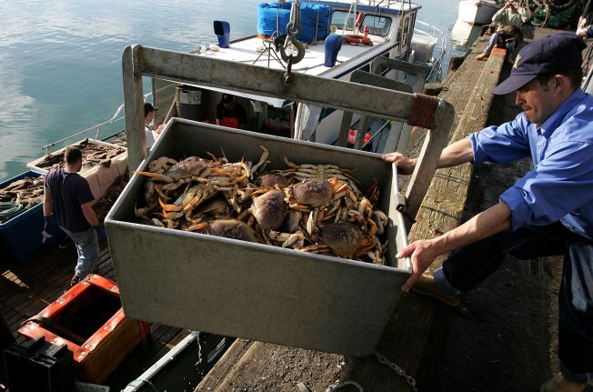 Dungeness Delay: Crabs Coming Later This Year