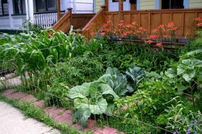 Sustainable Vegetable Gardening